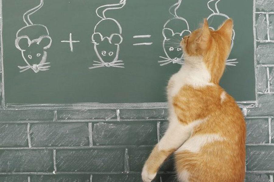 Почему кошки плохо поддаются дрессировке?